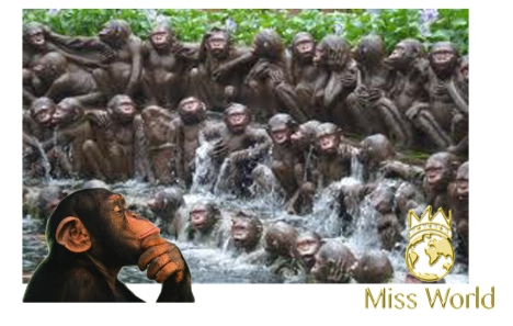 mw-monkeyworld