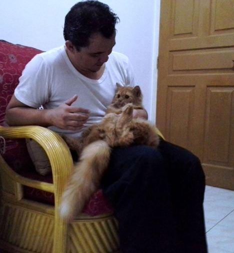 kucing-persia